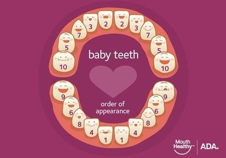 baby teeth order of appearance