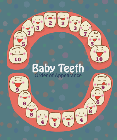Baby Teeth Development Chart